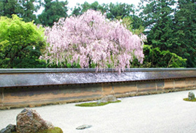 Visit Kyoto's Rock Gardens on the Randen and Find Zen