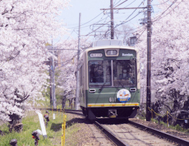 Cherry Blossom Tunnel – between Narutaki and Utano Stations